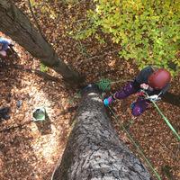 Tree Climbing Backyard Adventure