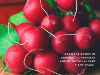 Edible Garden Series: Getting Started