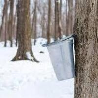 Virtual Lunchtime Lecture: Maple Sugaring Part 1