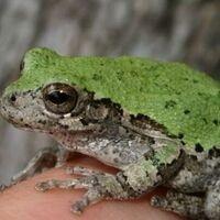 Virtual Lunchtime Lecture: Reptiles & Amphibians