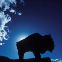 Buffalo sculpture and bluebird sky