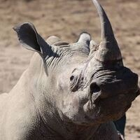 Crimes Against Rhinoceros: Exploring Attitudes and Perceptions of Stakeholders in South Africa