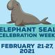 Elephant Seal Celebration Week