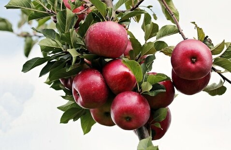 """""""Fruit Tree Field Day for the At-Home Orchardist"""""""