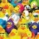 Rubber Ducky Activity Kit