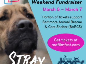STRAY Opening Weekend Fundraiser for BARCS