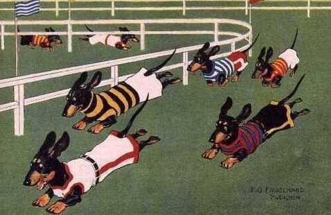 Georgia Dachshund Races