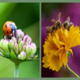 Beneficial Plants and Insects