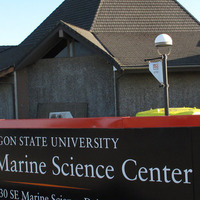 HMSC Research Seminar-Insight into the population structure of gray whales using genetics