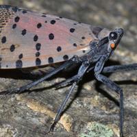 Invasive Species in PA