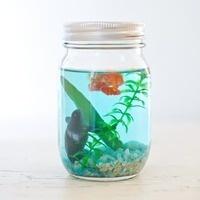 Ocean in a Jar