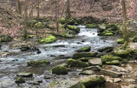 stream running through park
