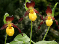 Plant Identification for the Rare Plant Watch List (Finger Lakes)