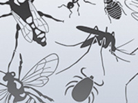 black and white drawings of flies, wasps, ticks, mosquitoes, bed bugs, and ants
