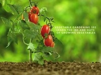 Edible Garden Series: Vegetables 101