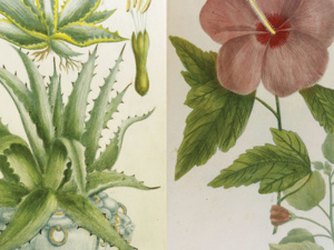 First Fridays at Becker: 'Botanical and Herbal Books'