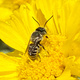 Native Plant and Pollinator Gardening Workshop and Plant Giveaway