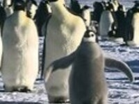 Doc Watchers: March of the Penguins