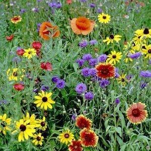 Fantastic Flower Scavenger Hunt