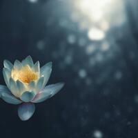 Mindful Drop-Ins