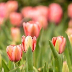 A Million Blooms