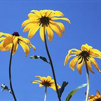 Take & Make: Fantastic Flower Spinners