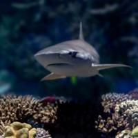 Pratt Virtual Storytime Live! Underwater Adventures