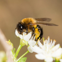 NCNPS Event: What the Bees See: How Native Plants Attract Pollinators