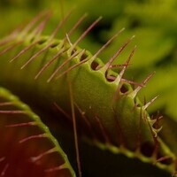 Online Class: Carnivorous Plant ID, Bog Ecology, and Bog Gardens