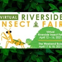 Virtual Riverside Insect Fair