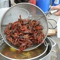 Crawfish Boil 3:20pm-3:35pm CARRY-OUT