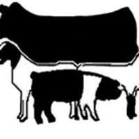 Beef Goat Sheep Swine