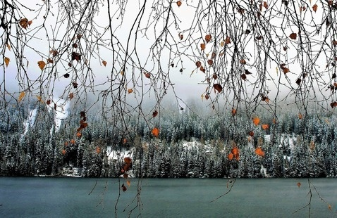 Twigs in front of a lake