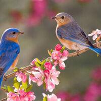 Bluebird Hike