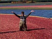 Leslie Holland in a bog of cranberries.