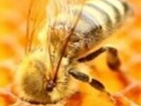 The Incomplete, Storybook Guide to Treatment-Free Beekeeping in Hawaii