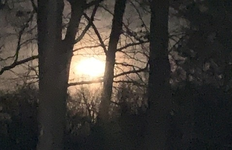 moonlight through trees
