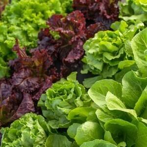 Vegetables 101 Workshop via Zoom
