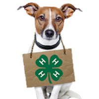 4-H Dog with sign