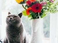 Pet and Plant Photo Contest: Graduate Student Appreciation Week Event