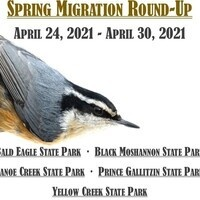 Spring Migration Round-Up