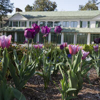Tuesday Gardening Series: Spring Bulbs and Beyond