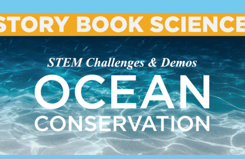 Story Book Science STEM Challenge: Protecting Sea Turtle Nests