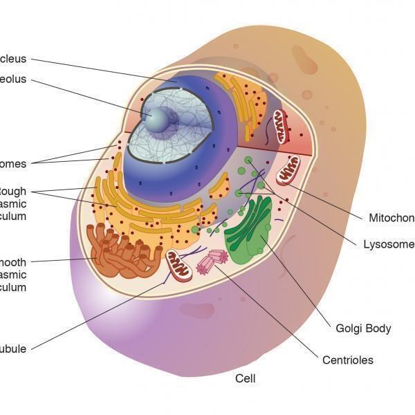 Cellular Self Assembly