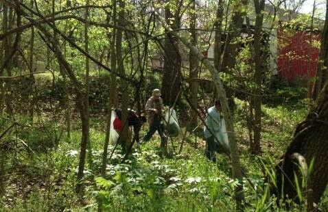 Volunteers pulling Garlic Mustard near the Narrows Covered Bridge
