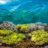 Earth Day Film Screening: Chasing Coral