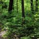 Bioblitz at Kings Gap! Virtual How-To