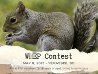 WHEP Contest Flyer (squirrel)