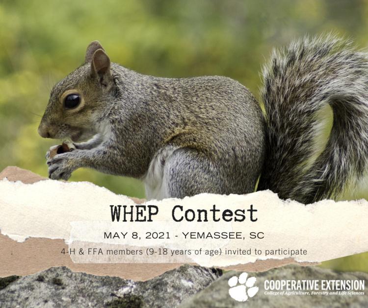 WHEP Contest Flyer (squirrel)