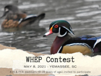 WHEP Contest flyer (wood duck)